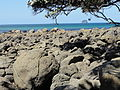 Concretions at hot water Beach 3.JPG