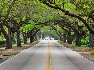 Coral Gables, Florida - Coral Way, one of the many scenic roads through the Gables
