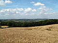 Cornfield at Champany Hill - geograph.org.uk - 520183.jpg