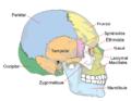 Crâne 2.png
