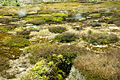 Craters of the Moon TAUPO-1168.jpg