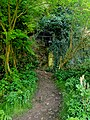 Creswell Gorge, Creswell Craggs, Notts (72).jpg