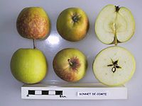Cross section of Bonnet de Comte, National Fruit Collection (acc. 1947-283).jpg