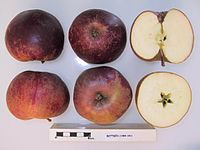 Cross section of Botden, National Fruit Collection (acc. 1989-041).jpg