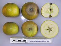 Cross section of Duke of Devonshire, National Fruit Collection (acc. 2000-032).jpg