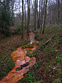 Crowborough Ghyll Tributary, Old Lodge Warren - geograph.org.uk - 647885.jpg