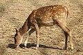 Cute deer.17.jpg