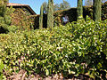 DSC24909, Viansa Vineyards & Winery, Sonoma Valley, California, USA (6931941131).jpg