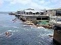 DSC28351, Monterey Bay Aquarium, California, USA (5582416022).jpg