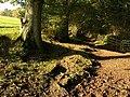 Dartmoor Way below Rora Down (4) - geograph.org.uk - 1013148.jpg