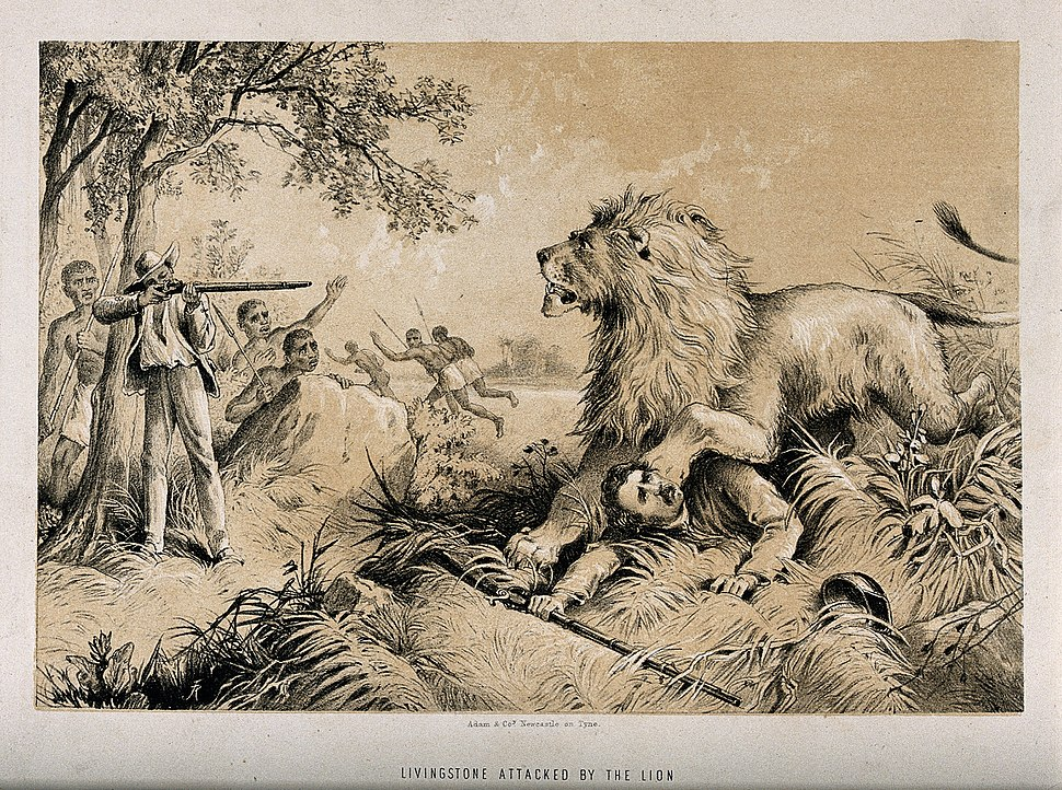 David Livingstone attacked by a lion in Africa. Lithograph. Wellcome V0018847