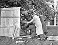 De Denker van Rodin wordt uit kist gehaald voor plaatsing in de beeldentuin va, Bestanddeelnr 907-8866.jpg