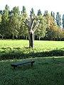 Dead Tree, Walsall Arboretum - geograph.org.uk - 899518.jpg