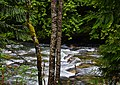 Denny Creek III - panoramio.jpg