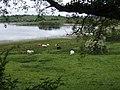 Derrybrick Lough - geograph.org.uk - 436895.jpg