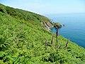 Devonian coast - geograph.org.uk - 1337570.jpg