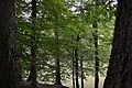 Dilijan.National.Park 25.jpg