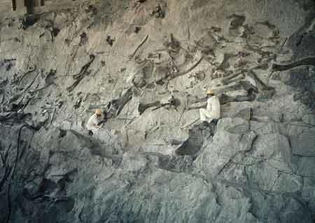 Dinosaur National Monument-inside the Dinosaur Quarry building.jpeg