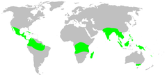 Distribution.tetrablemmidae.1.png