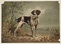 Dog LCCN2003680077.jpg