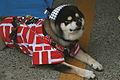 Doggie Days at the Festival (527800990).jpg