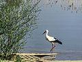 Dojran Lake 22.jpg