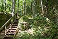 Dolomitfelsen am Steinberg 02.jpg
