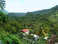 Dominica, Karibik - The Rainforest in Laudat - panoramio.jpg