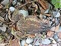 Dornbirn Dead Frog-02.jpg