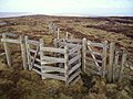 Double Kissing Gate - geograph.org.uk - 770634.jpg