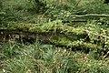 Draved-Skov-nedbrydning1.jpg