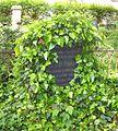 Dresden Innerer Neustädter Friedhof Grab Sulze.JPG