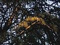 Drveće u parku Svetog Save u Nišu (11).jpg