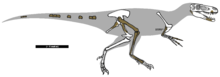 Dryptosaurus remains 01.png