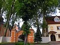 Drzewostan klasztoru.JPG