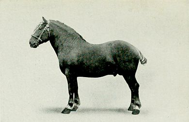EB1911 Horse - suffolk stallion.jpg