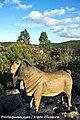 Ecoparque Sensorial da Pia do Urso - Portugal (8082643095).jpg