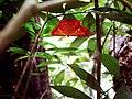 Endemic Butterfly.jpg