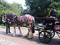 Equus caballus Isle of Wight 2.jpg