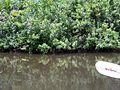 Estero river plant life.jpg