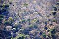 Euphorbia confinalis, d, Lebombo.jpg