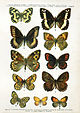 European-butterfly 056-V.jpg
