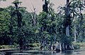Everglades National Park 大沼澤地國家公園 - panoramio.jpg