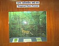 Exhibit of Tropical Rain Forest at Regional Museum of Natural History,Bhopal,India.jpg