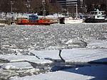 Förin stoppad av is mars 2013, större flak.JPG