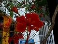 FLOR, RINCON DE GUAYABITOS - panoramio (11).jpg