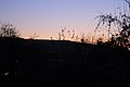 FOREST TWILIGHT (2011-11-07 18-35) - panoramio.jpg