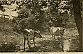 Facts about Kansas. A book for home-seekers and home-builders. Statistics from state and national reports. Farm lands, grazing lands, fruit lands (1903) (14777903302).jpg