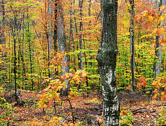 Protected areas of Michigan - Autumn woods in Tahquamenon Falls State Park