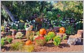Fall Garden Display (129720163).jpeg